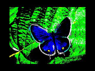 Buttafly (Buttafly)