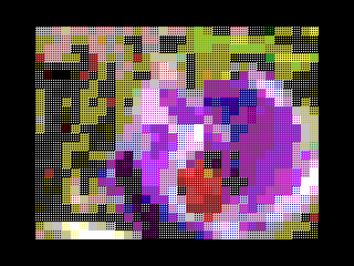 00032036