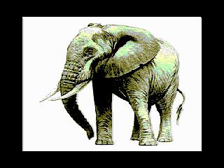 Elephant (Elephant)