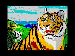Amur tiger (Amur tiger)