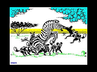 Zebra (Zebra)