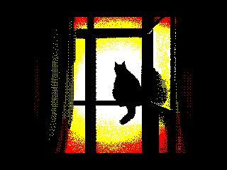 Кот и солнце (Кот и солнце)