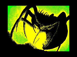 spider (spider)