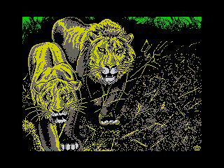 Lions (Lions)