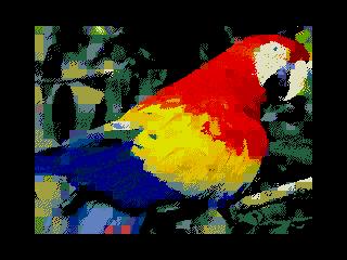 Parrot1 (Parrot1)