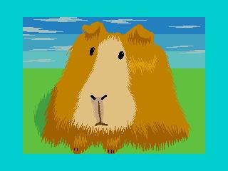 Морская свинка (Морская свинка)