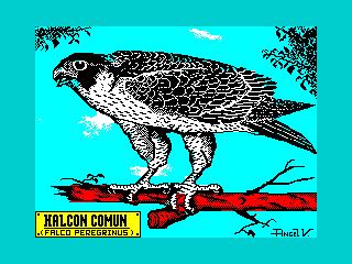 HALCON COMUN