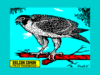 HALCON COMUN (HALCON COMUN)