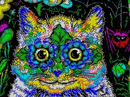 KOTUK (Котик)